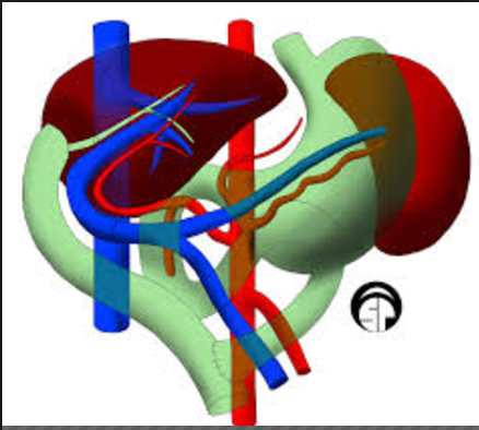 A new algorithm-based system to facilitate organ transplants being introduced