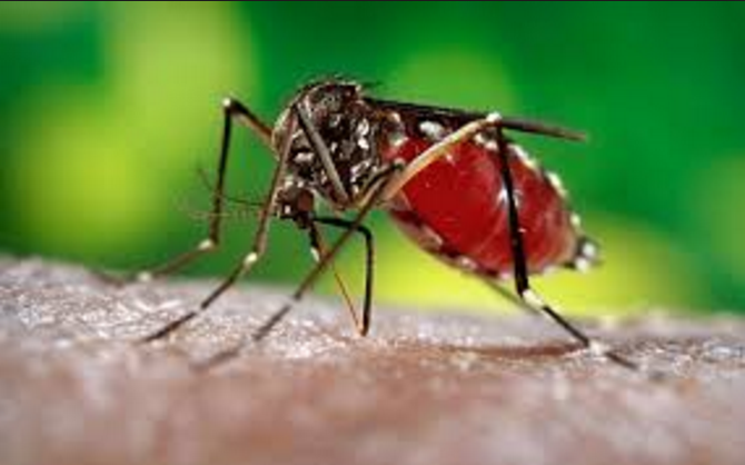 Molecule for potential drug to cure Zika virus fever found