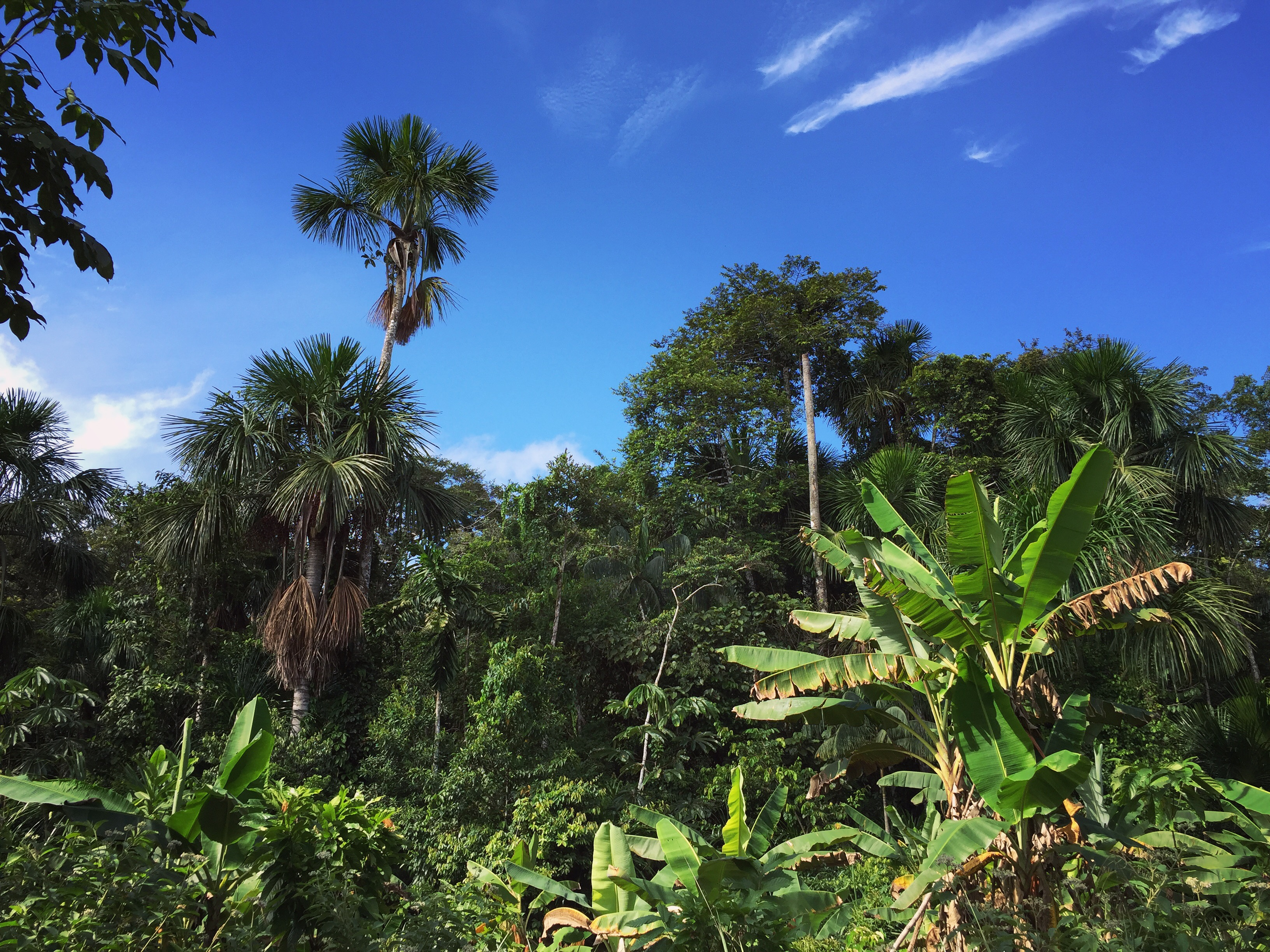 Brazil to open Amazon rainforest national reserve for mining
