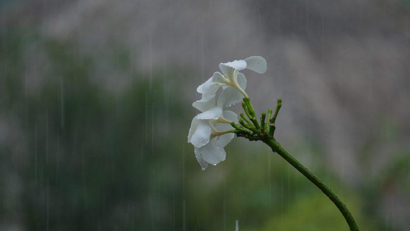 Monsoon 2017 : Odisha to receive heavy rainfall on Tuesday IMD