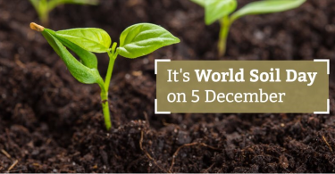 World Soil Day: Care for the land, save the world