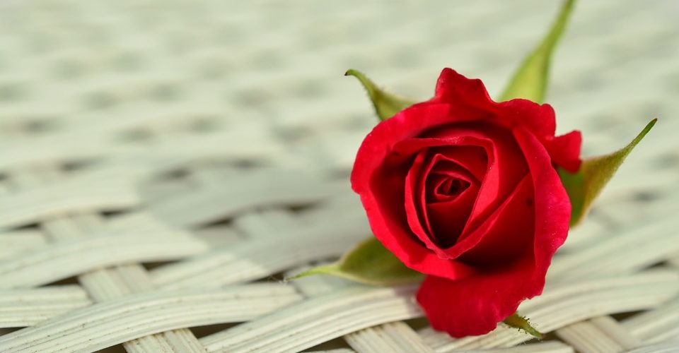 Happy Rose Day 2018: Wishes, Images for your loved ones