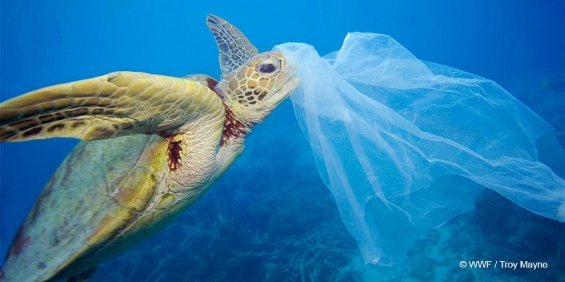 On this World Environment Day take a pledge to Stop using Plastic