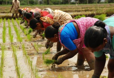 Cabinet approved new MSP for Kharif Crops, increased 50% MSP