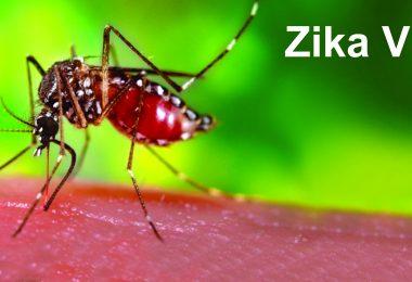 PMO seeks report from Health Ministry as Zika virus outbreaks in Rajasthan
